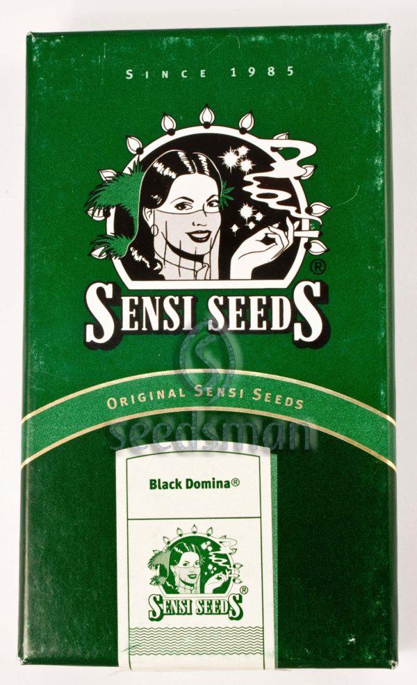 Black Domina Regular Seeds